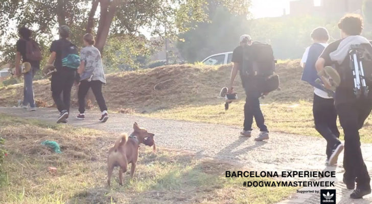 Dogway Masterweek 2017. Barcelona Experience Clip
